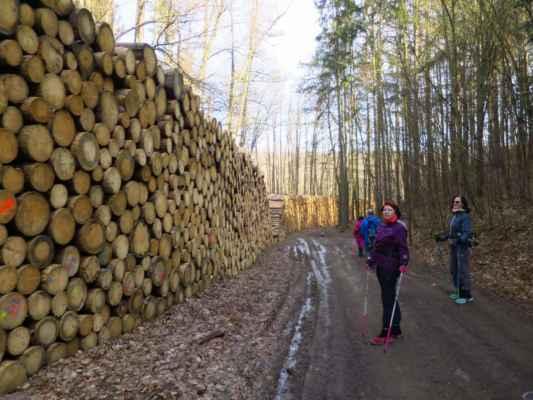 dřevo kam se podíváš
