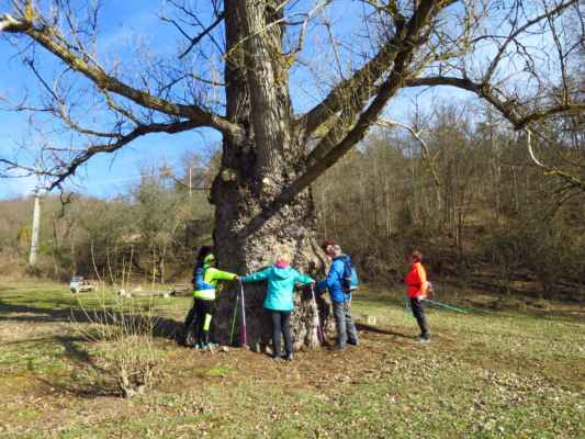 kolik je potřeba hůlkařů na obejmutí 1 stromu? :-)