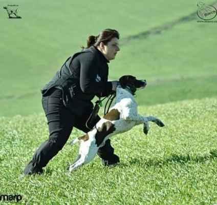 Věra Klimešová vypouští na běh psa BFP Art Fluidum Centauri.