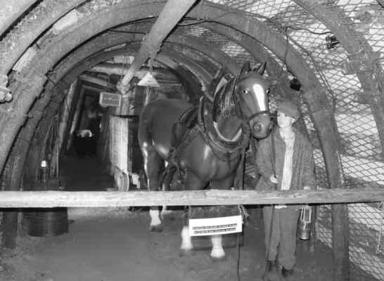 Kdysi se tu pro tahání vozíku používali koně.