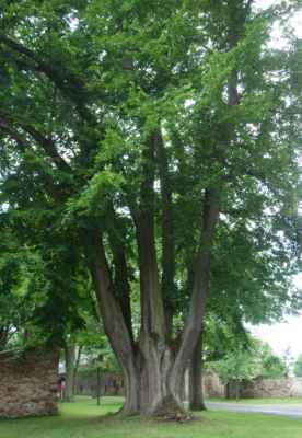 A najdou se tu i velmi staré a zajímavě rostlé stromy.