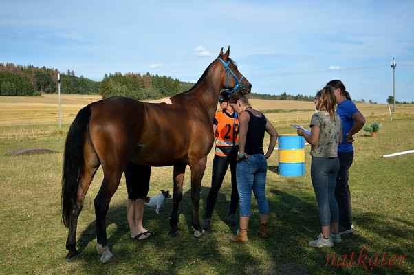 Pavlína Pártlová + Shakal - vstupní veterina
