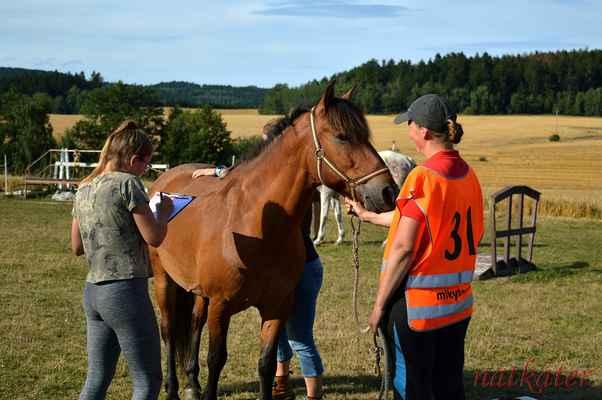 Eliška Princová + Garcz - vstupní veterina