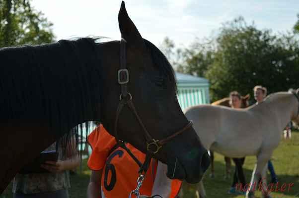 Kateřina Králová + Al Giada Bint Dubai Pasha - vstupní veterina