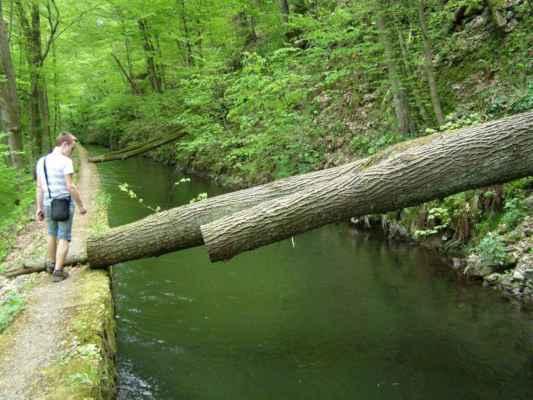 Weisshuhnův kanál 19 - padlé stromy nad kanálem
