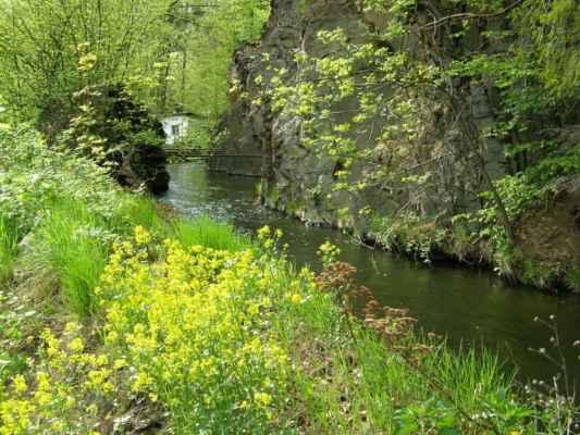 Weisshuhnův kanál 37 - květena na břehu kanálu