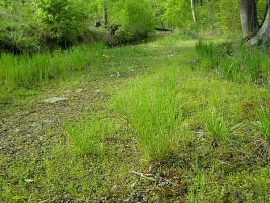 Weisshuhnův kanál 56 - traviny na břehu