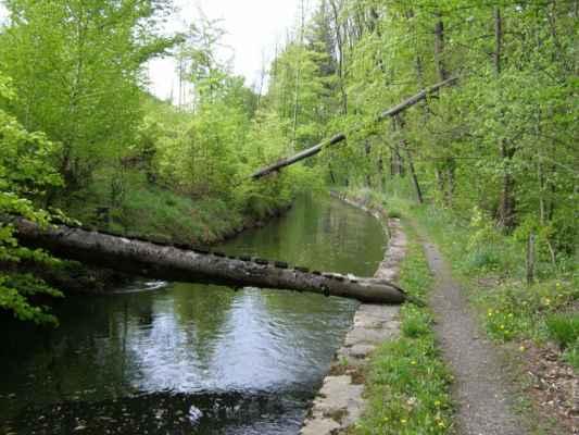 Weisshuhnův kanál 58 - poškozený most a padlý strom