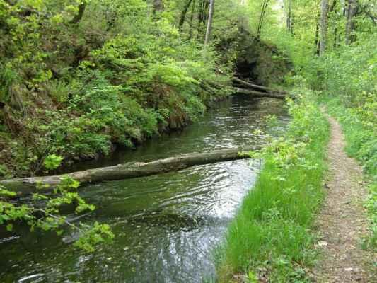 Weisshuhnův kanál 59 - padlé stromy před druhým tunelem