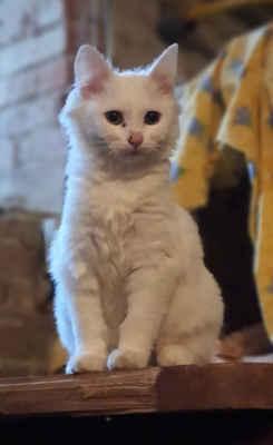 11.11.2020 - Dnes k nám děti přinesly kotě, které našly pod viaduktem v Hodoníně. Je to 4 měsíční kočička a dostala jméno Kira.
