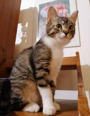 22.2.2021 - Lexinka je zdravá, kastrovaná a může do nového domova! Je to krásná kočička, umazlená, miluje člověka a je vhodná i do rodiny s dětmi. Ráda si hraje a dovádí a potřebuje mladého kočičího parťáka.