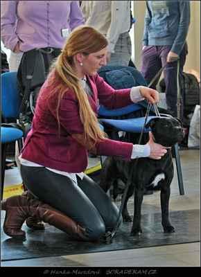 Keep Up With Domidar Dogs (Glimmer Man Domidar Dogs X Grinning Devils Domidar Dogs) - Best Puppy Dog - nejlepší štěně - PES
