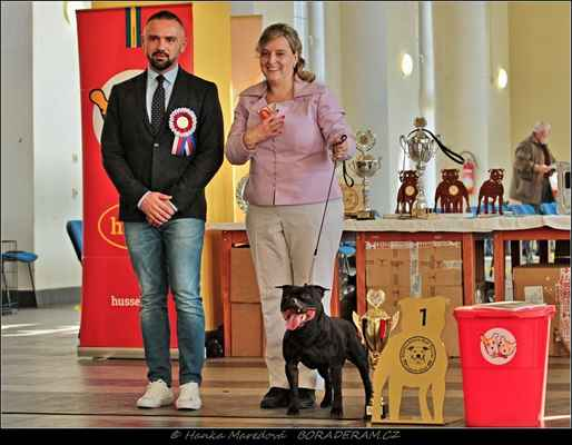 Glimmer Man Domidar Dogs (Breno Domidar Dogs X Maya Stawka Wieksza Niz Zycie) - Klubový vítěz - PES