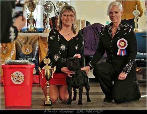 Absolute Belle of Ambassador Sun (Adwin Star Sallystaff X Dix Ambassador of Moravia Knight) - Klubový vítěz - FEN