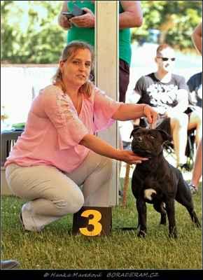 Keep Up With Domidar Dogs (Glimmer Man Domidar Dogs X Grinning Devils Domidar go Ballistic) - Psi - třída mladých - V3