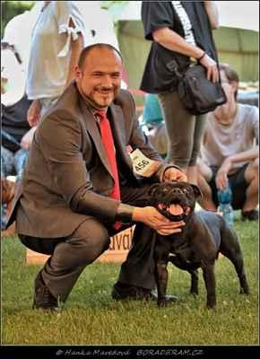 Hold Me Back Domidar Dogs (Decimus Prime Domidar Dogs X Maya Stawka Wieksza Niz Zycie) - Psi - třída otevřená - V1, CAC, NV, BOS