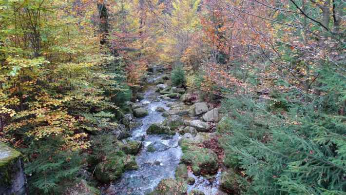 Přecházím Jelení potok, který se o pár metrů dále slývá s Kamenicí