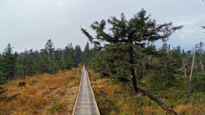 Po novém chodníku stoupám do sedla Černé hory a vpravé části je již zmiňovaná Vánoční louka