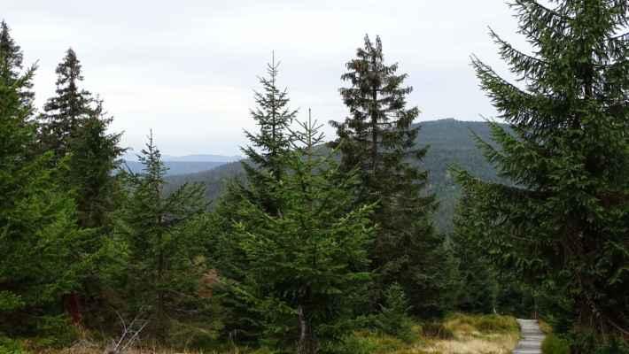 Nastává sestup k Holubnické cestě. Vpravo Holubník. Vlevo vzadu zprava je Oldřichovský Špičák, Strmý vrch a dále Lysý vrch nad Albrechticemi u Frýdlantu. Hřeben blíže patří k Olivetské hoře