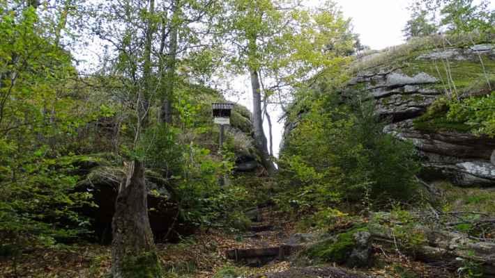 Na vrcholu a v okolí značné polomy a imisemi zdevastovaný původní prales