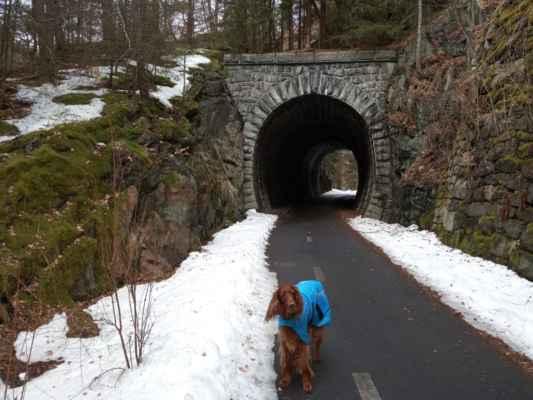 Stříbrná stezka z Horního Žďáru do Jáchymova vede po bývalé železnici. - Jediné, co z ní zůstalo, je 125.letý tunel
