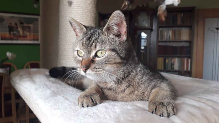 23.3.2021 - Oznamovatelka našla opuštěnou kočičku ve Strážnici, nikdo se k ní nehlásil. Dala jí jméno Evelínka a nechala si ji doma, ale kočička se bojí domácích koček a musí být oddělena, proto u oznamovatelky nemůže zůstat. Zajistili jsme kastraci, očkovámí a odčervení a budeme kočičce hledat nový domov.