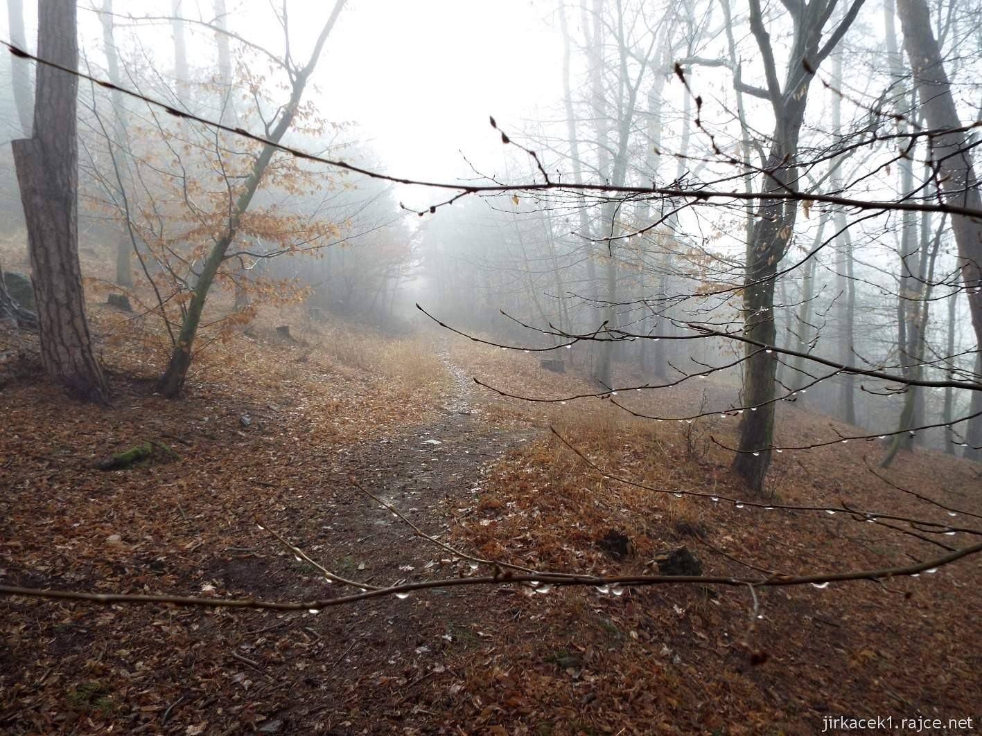 011 - Stezka u druhé keše - kapky na stromě