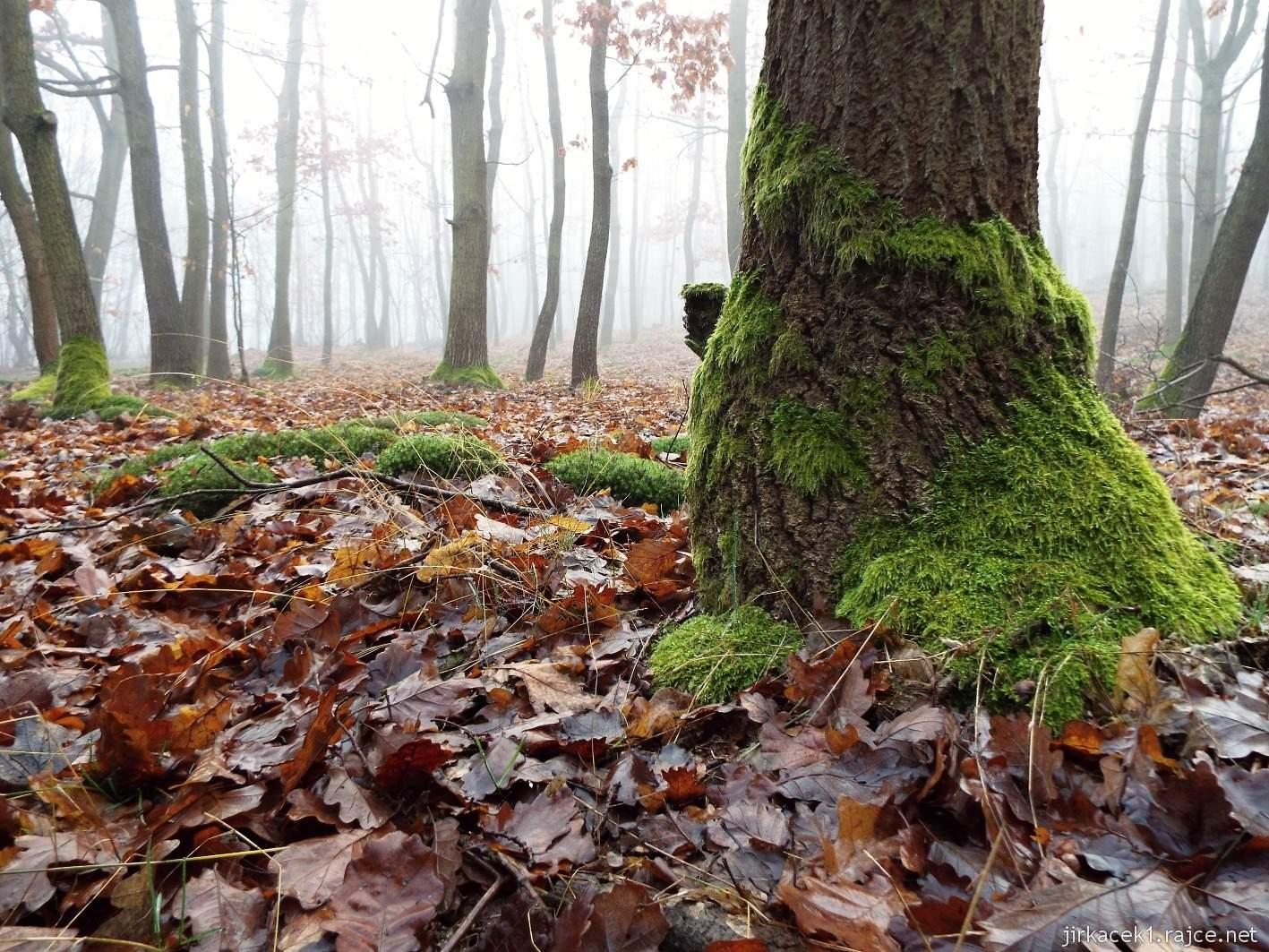 021 - mechem porostlé stromy mezi druhou a třetí keší