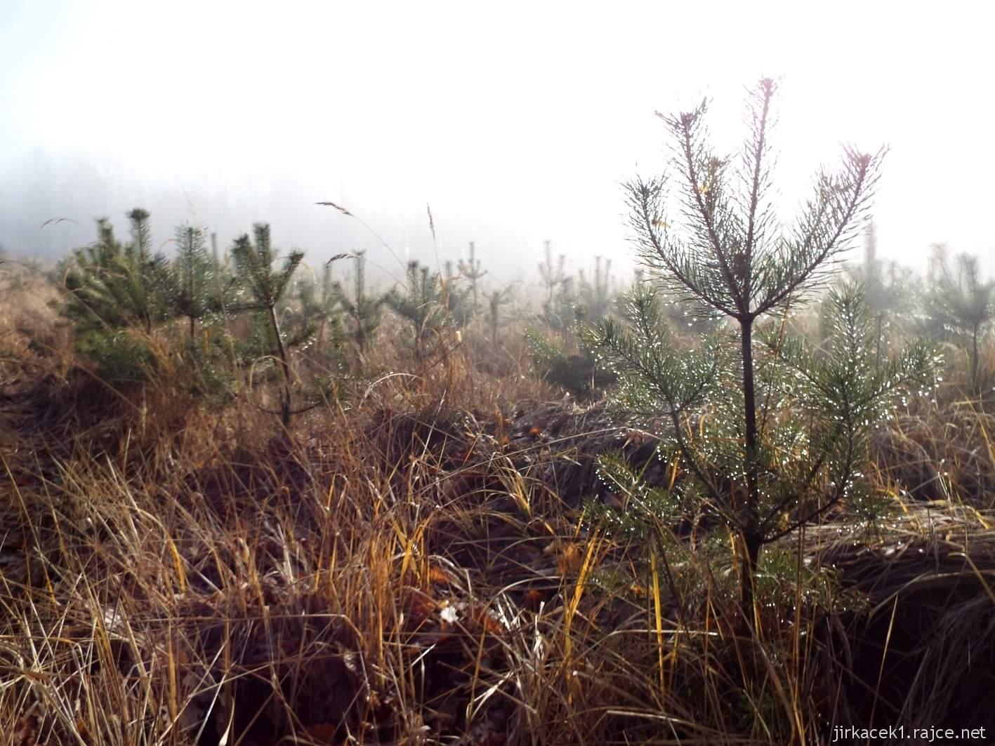 038 - čekání na mýtině během cesty ke čtvrté keši - stromky s kapkami