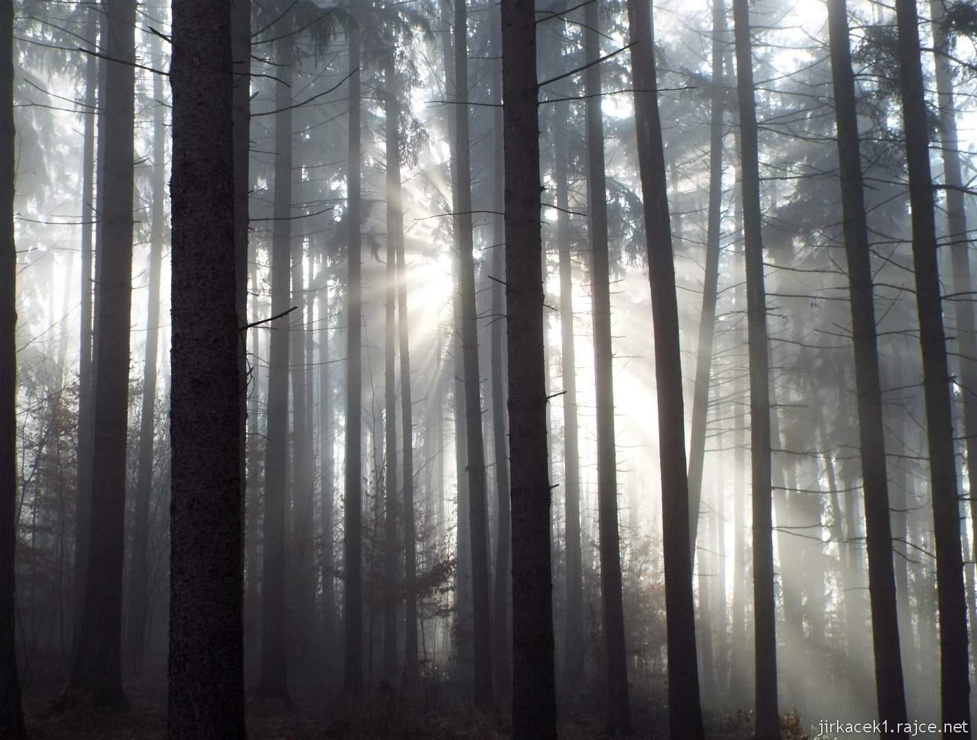 048 - prosvítající slunce mezi stromy během cesty k páté keši