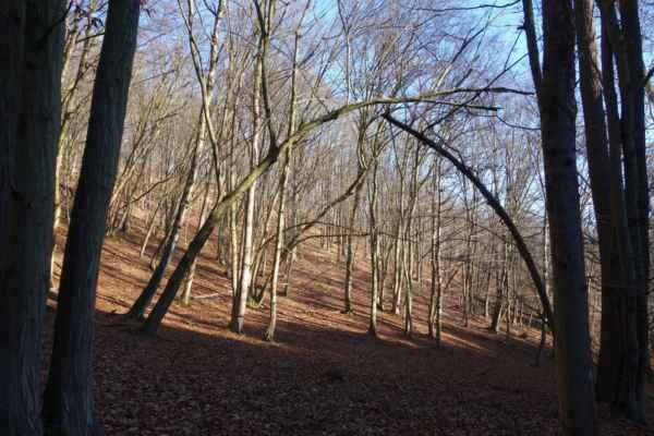 Bukové lesy v prosincovém slunci.
